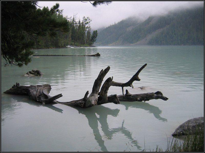 кучерлинское озеро, алтай, горы, дерево, туман, озеро Туман... №2photo preview