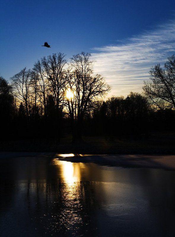 павловск, закат, ворона photo preview