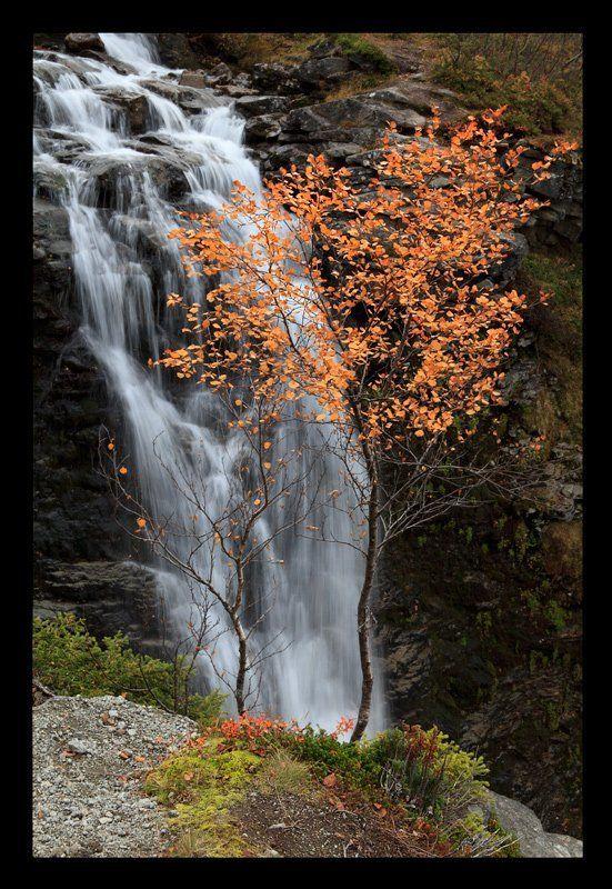 хибины, кольский, осень Хибинские зарисовкиphoto preview