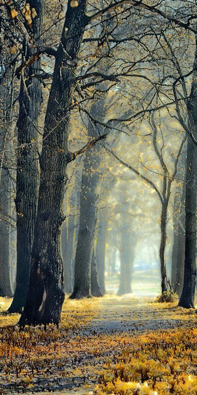осень, природа Дождливая пора.photo preview