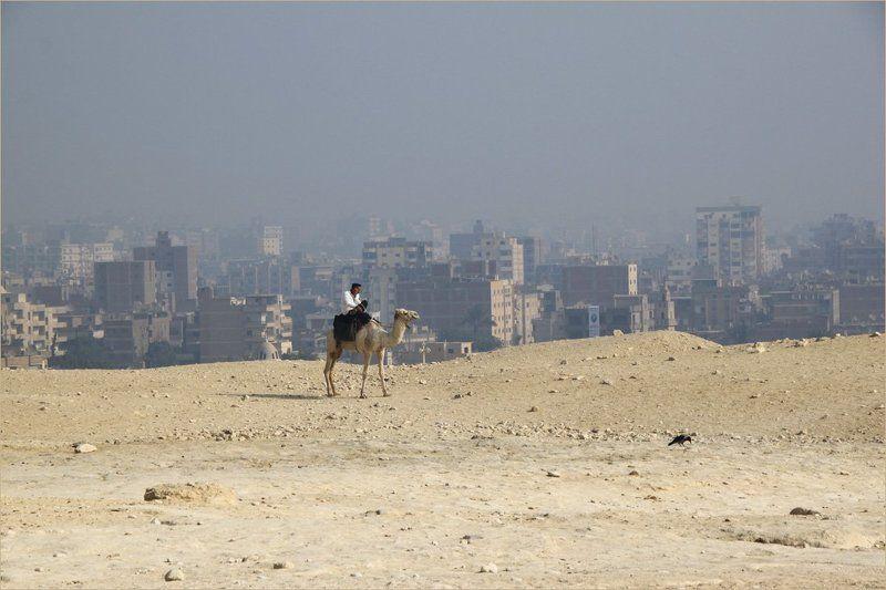 каир, верблюд, город Каирphoto preview
