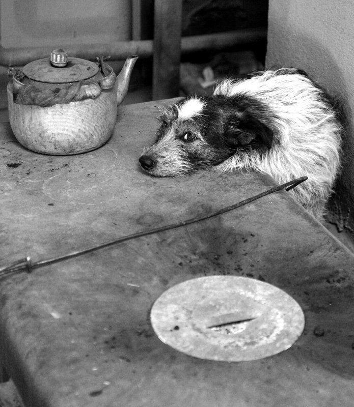 собака, печь, зима, тепло, животное, чайник, кочерга Скорей бы лето...photo preview