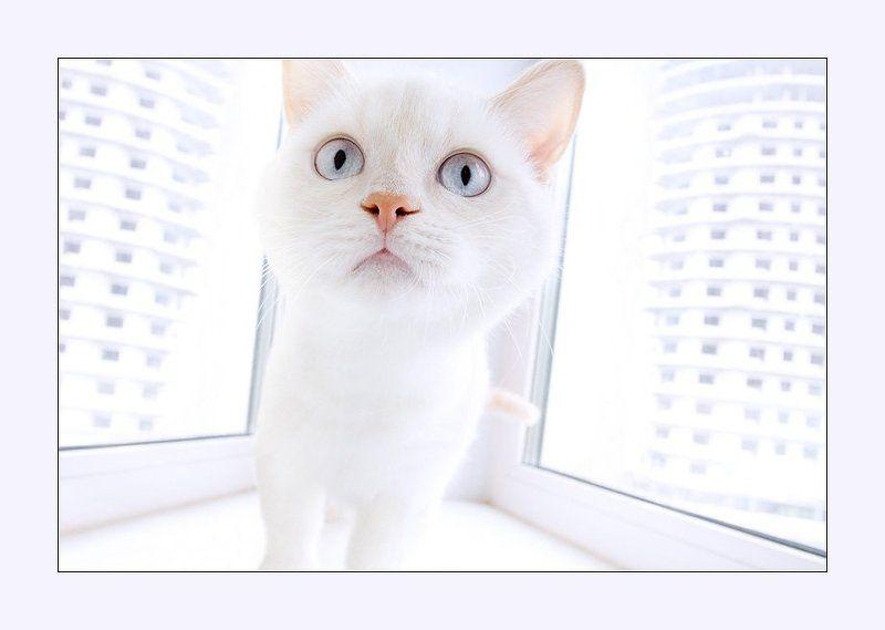 кот, кокс, белый кот, perec, влад селезнев Astronaut/Космонавтphoto preview