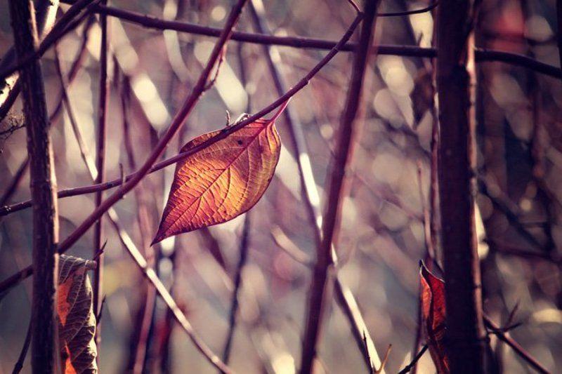 листья, осень, последний лист, природа, москва, Последний лист октября..photo preview
