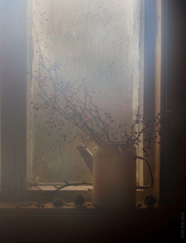 барбарис, окно Барбарисphoto preview
