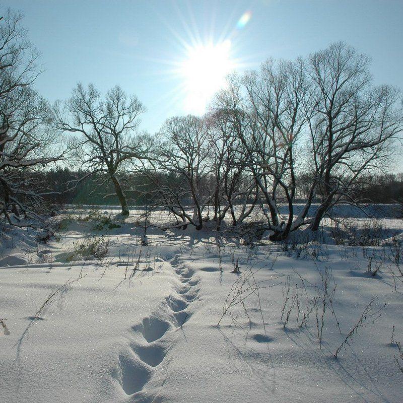 зима, снег, следы ***photo preview