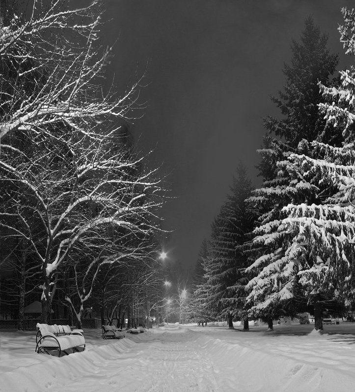 снег, парк, ночь Зимний паркphoto preview