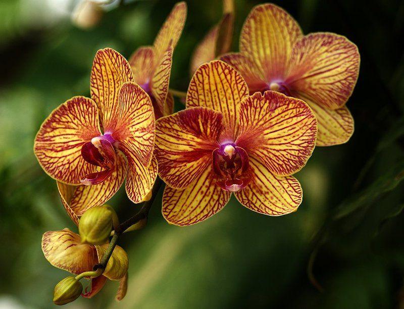 цветы,парк,орхидея, Орхидеяphoto preview