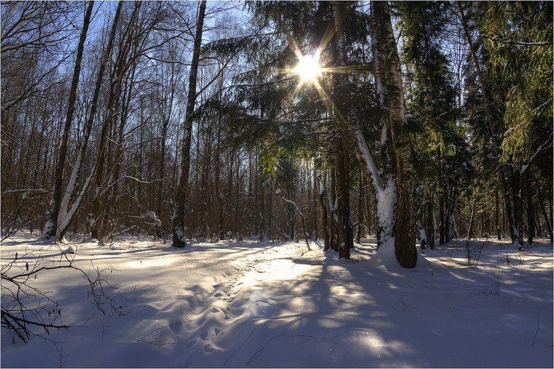 калуга Зимний лесphoto preview
