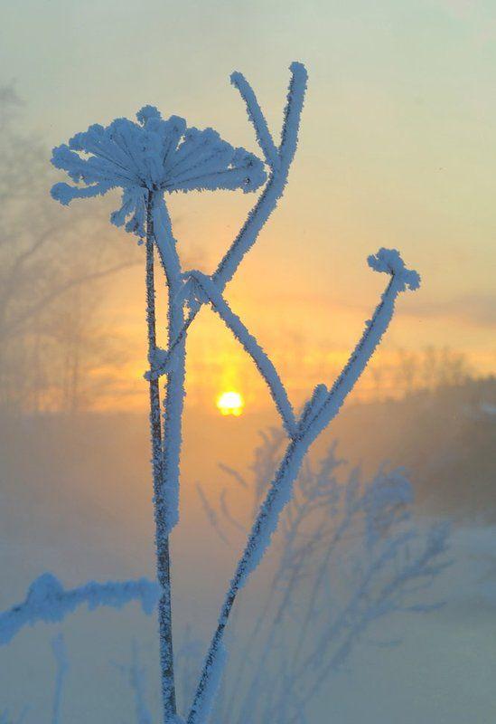 зима, мороз, солнце Зимние причудыphoto preview