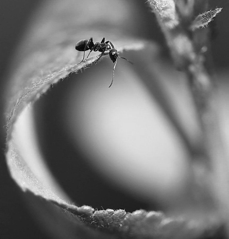 Черно-белое макроphoto preview