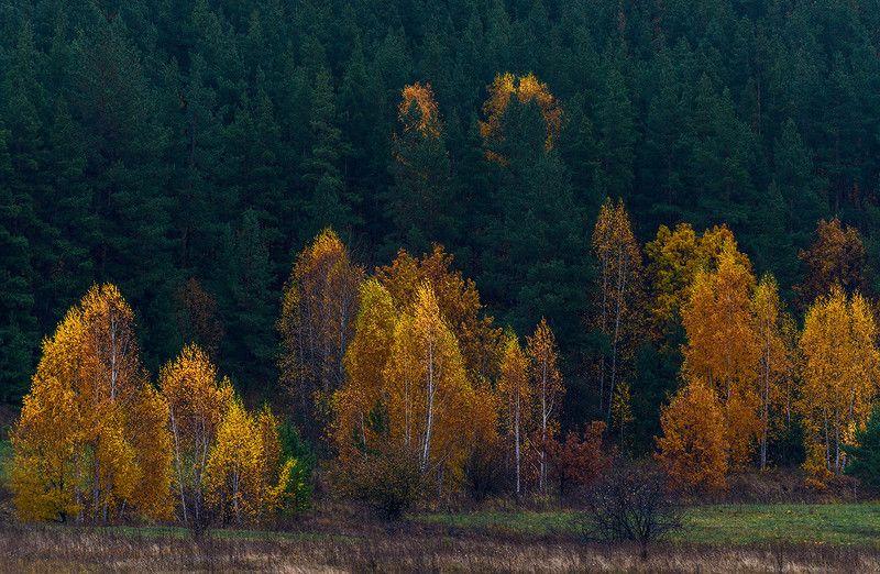 И вот пришла осень...photo preview