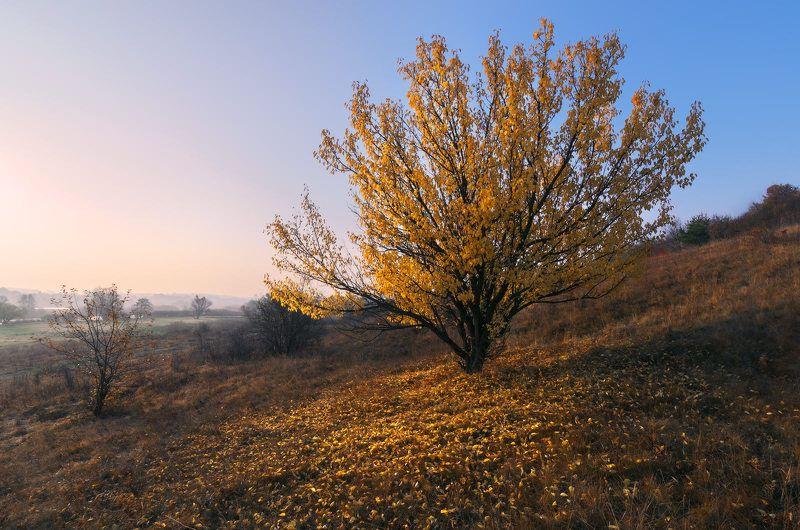 осень, октябрь, пейзаж, утро, рассвет, листопад, заморозок, сезон, меланхолия, настроение Последний листphoto preview