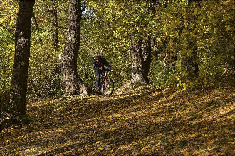 осенний лес, тропа, велосипедист, краски осени Что такое осень...photo preview