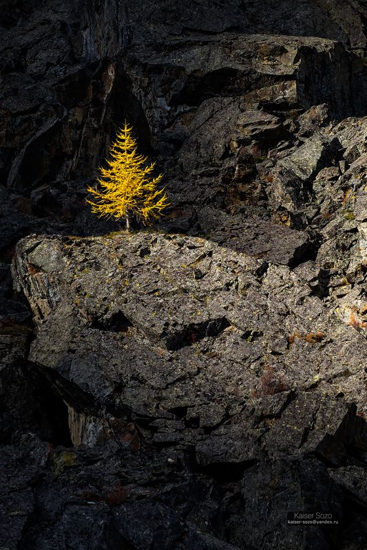 Одинокая лиственницаphoto preview