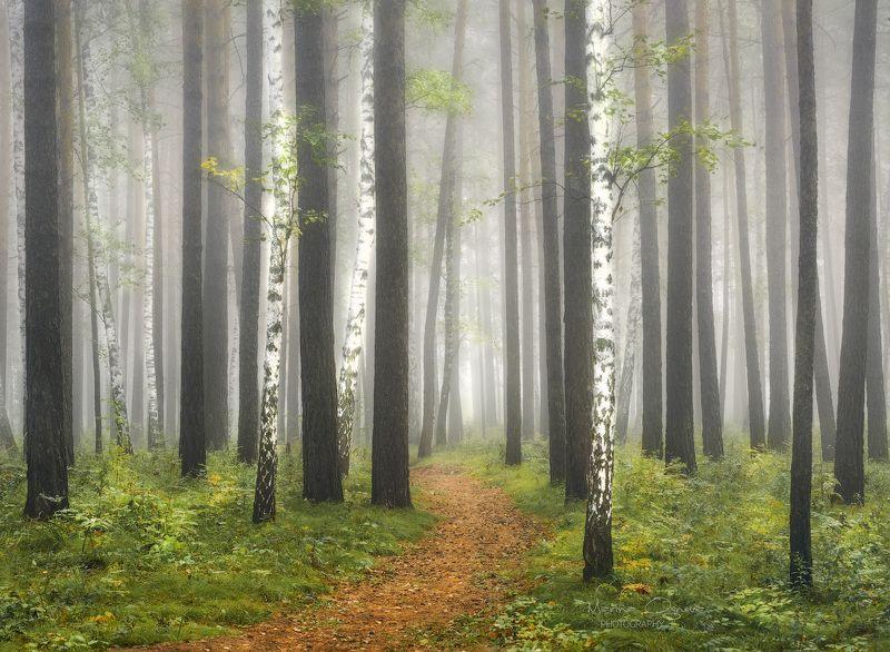 лес, осень, туман, деревья Туманный лесphoto preview