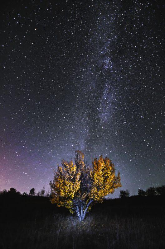 ночь, звезды, млечный путь, дерево, осень, желтые листья, сезон, природа, пейзаж, астрофото Под небом осениphoto preview