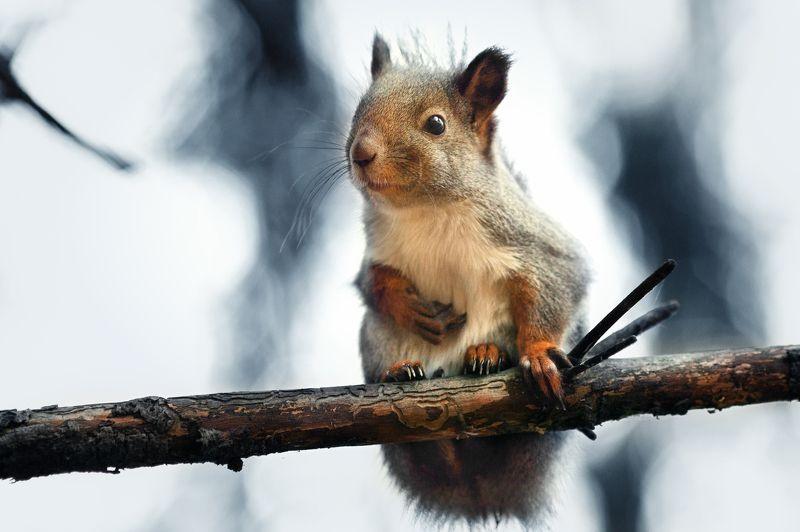 белки, осень, лес Про бельчонкаphoto preview