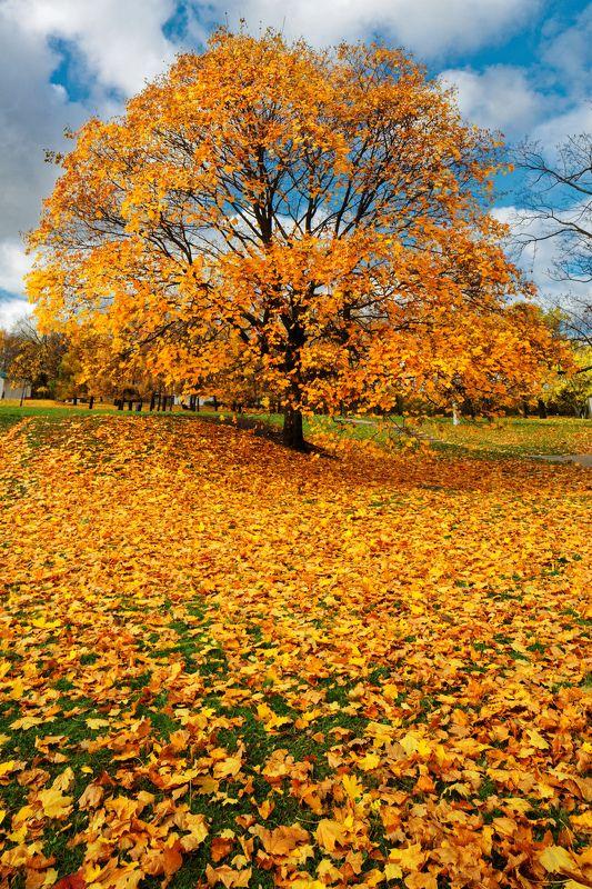 город, Москва, Коломенское, парк, клен, желтый, осень, небо, тучи, облака, красота  Ее величество - Осень photo preview