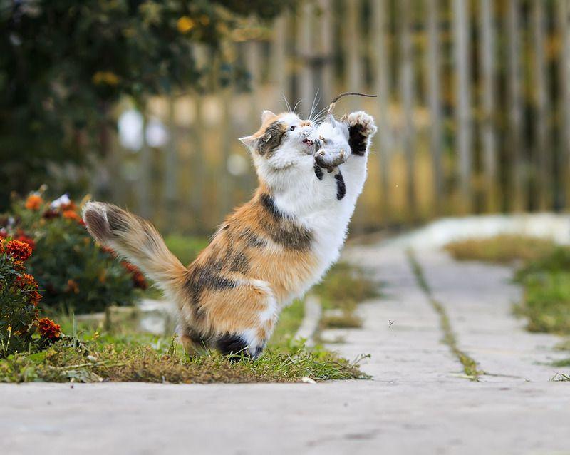 кошка- мышка photo preview