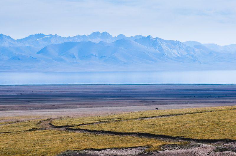 киргизия, горы, озеро, берег, лошадь, kyrgyzstan, mountains, lake, horse photo preview