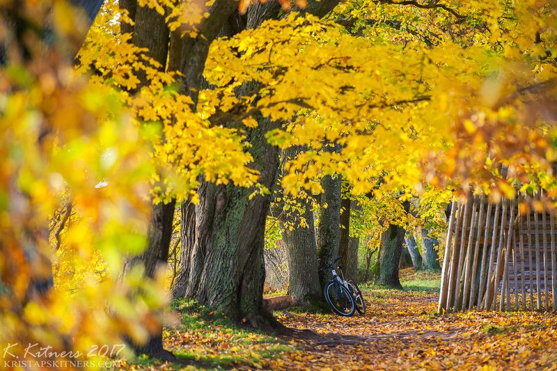 branch grass bush autumn trees leaves road park yellow bicycle countryside light Autumn In Countrysidephoto preview