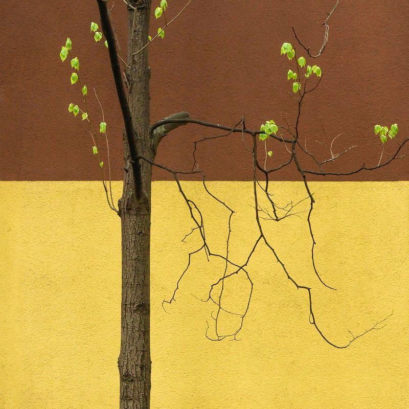 весна мои квадратыphoto preview