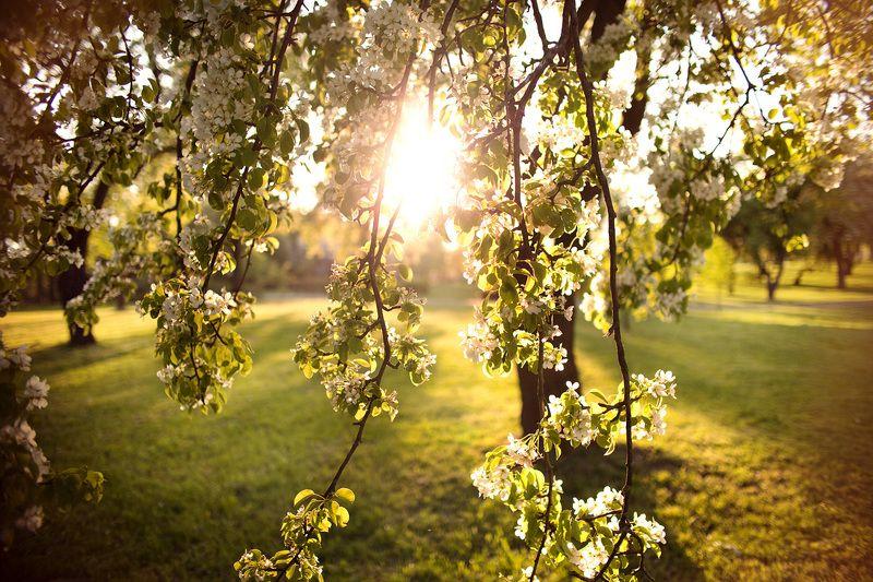 закат, ветки, дерево, листья photo preview