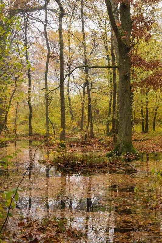 природа, лес, осень, пейзаж После затяжных дождейphoto preview