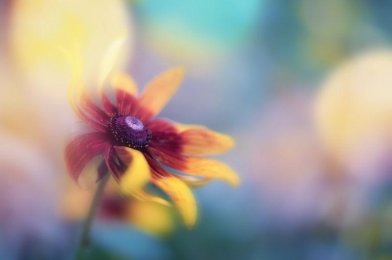 antrisolja, nature,flower, Краски ветраphoto preview