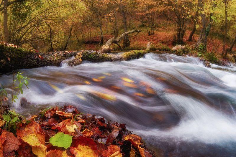 лес, осень, природа, пейзаж, чернореченский каньон photo preview