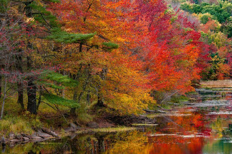 Autumn huesphoto preview