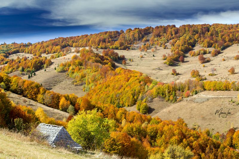 autumn,fall,colors,nature,apuseni,romania,hills,trees, Colors of naturephoto preview