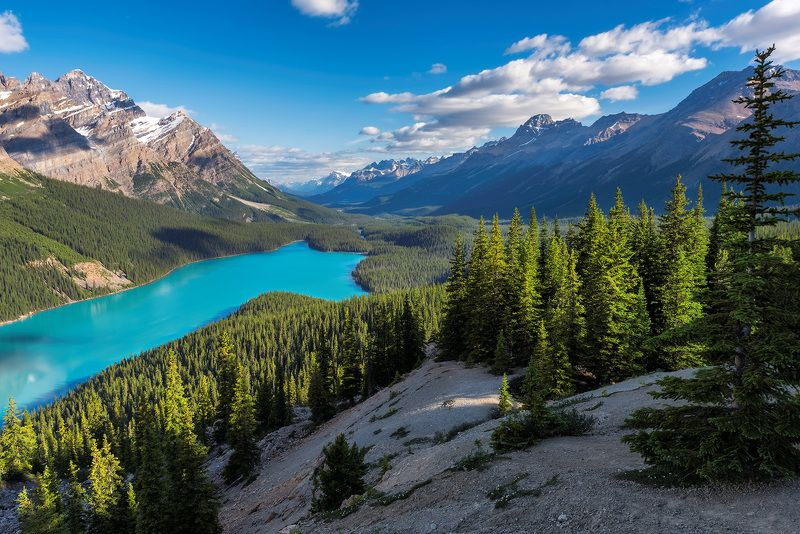 peyto lake, rocky mountains, banff national park, canada, banff, lake, nature, louise, moraine, landscape, jasper, scenery, mountain, canadian rockies, summer, rocky, alberta, scenic, sunrise, hiking, trekking, national, park, calgary, Canadian Rockiesphoto preview