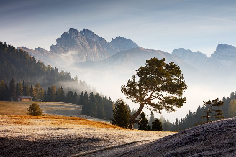 dolomites, dolomiti, light, fog, mist, morning, pine, tree, mountains, peaks, alps, europe, mood, autumn, fall Pine Treephoto preview