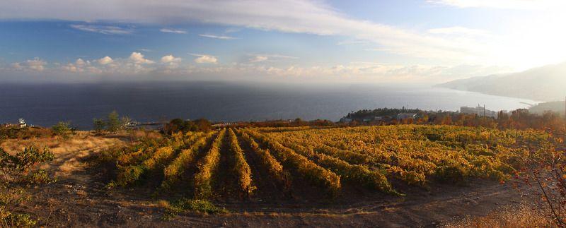 Крым, осень Осенний виноградникphoto preview