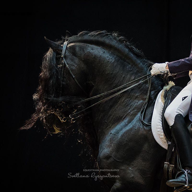 horse, лошадь, лошади, details ***photo preview