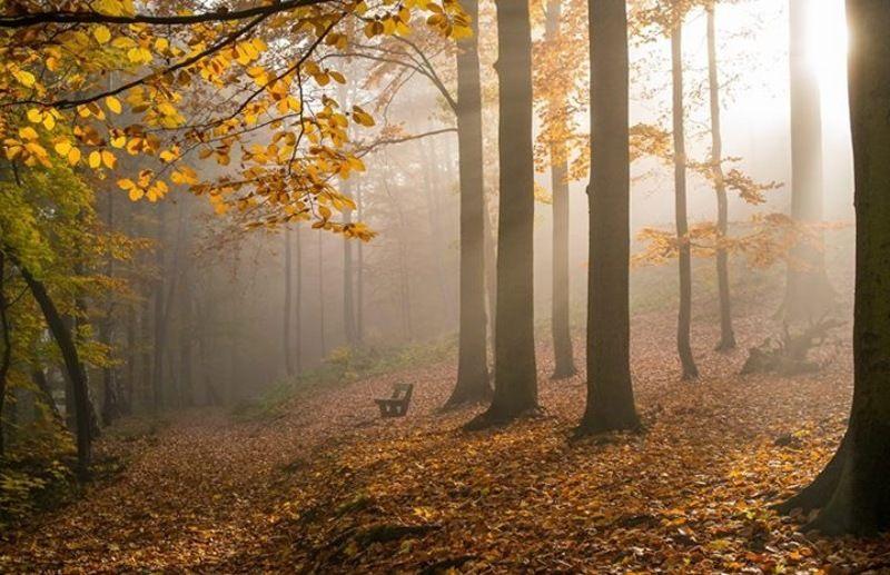 чехия карловы вары осень Золотая осень в Чехииphoto preview
