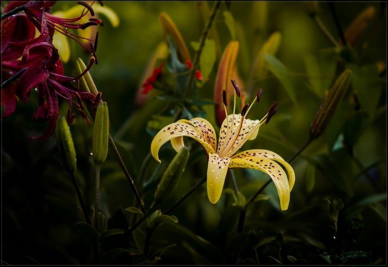 макро,цветы Разноцветие на клумбеphoto preview