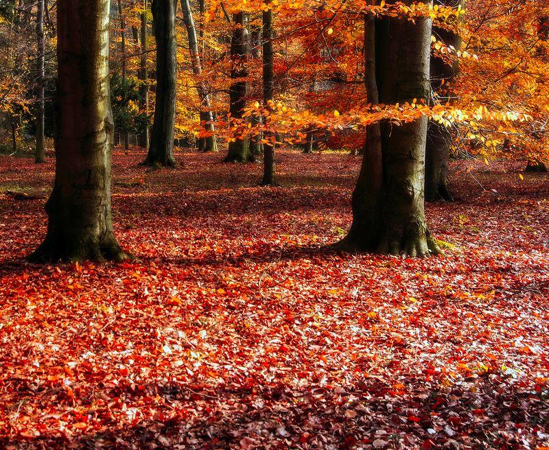 Роняет лес багряный свой уборphoto preview