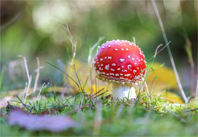 Малыш Тюрингского леса)  Baby aus dem Thüringer Wald.photo preview