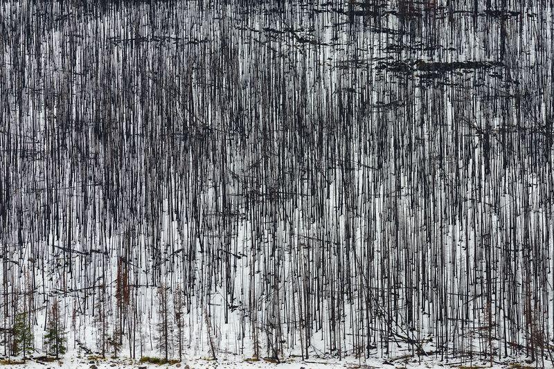 Канада, Скалистые горы, Джаспер, лес Мёртвый лесphoto preview