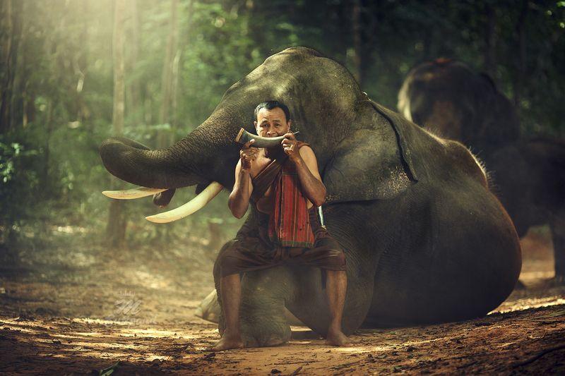 elephant,Portrait,man,Thailand,Thailandonly, Big Friendsphoto preview