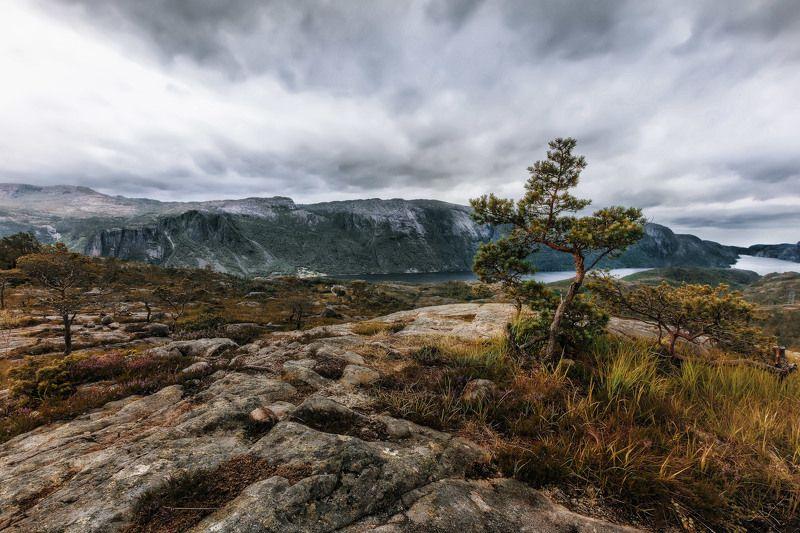 горы, фьорд, дерево, трава, небо, облака Хмурое небо и дерево.photo preview