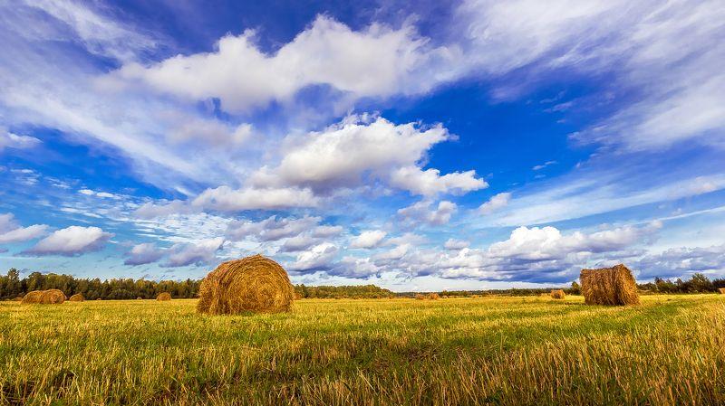 поле, стога, сено, небо, лето, деревня, пейзаж Русское полеphoto preview