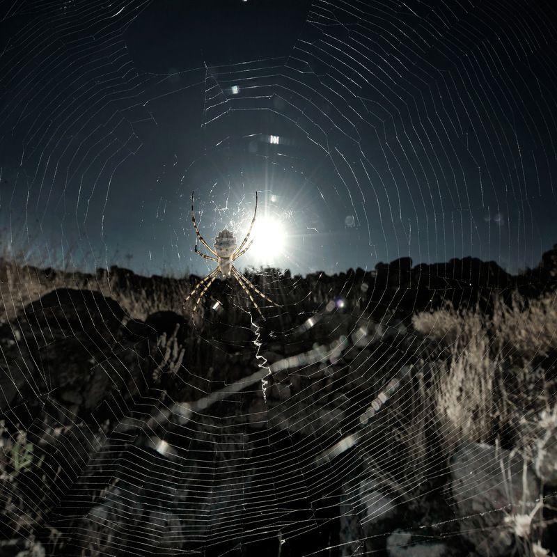 -ночной дозор-photo preview