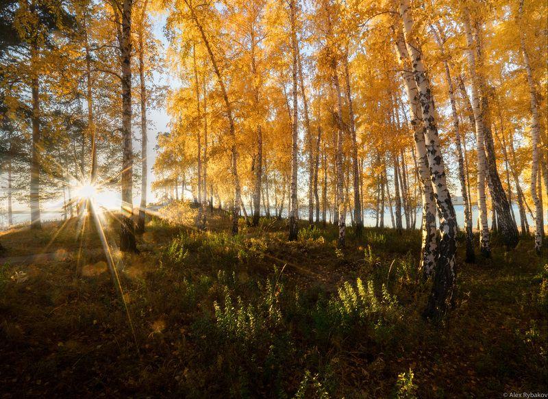 осень, лес, березы, лучи, Осень Юэного Уралаphoto preview