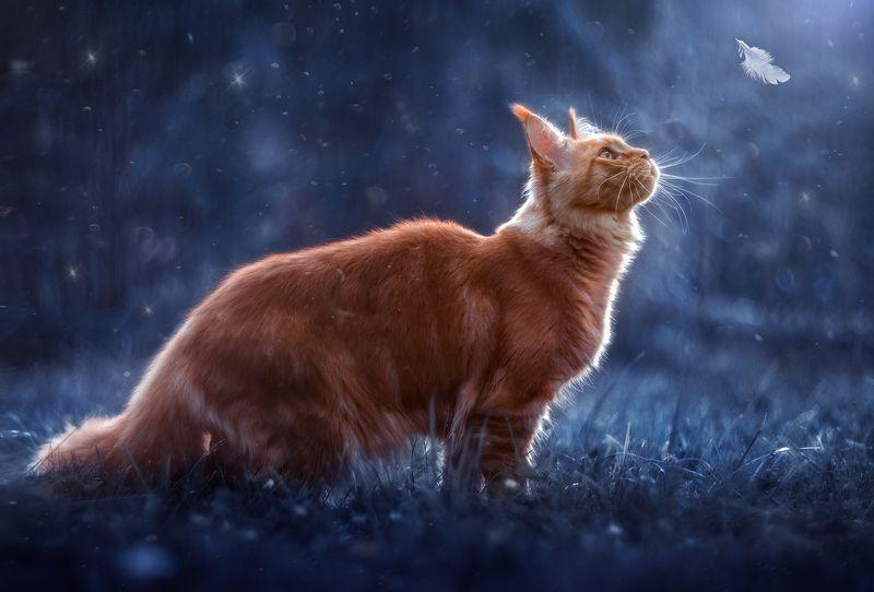 кошка, мейн-кун, рыжая, лето, ночь, сад Волшебная ночьphoto preview