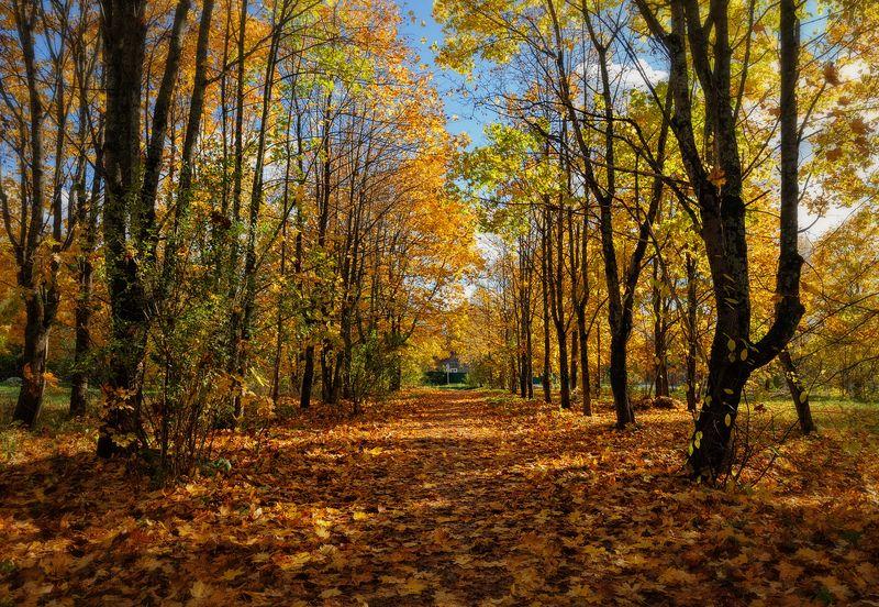осень,октябрь,сквер,ковер,листва,пейзаж Ковром стелила землю осень...photo preview