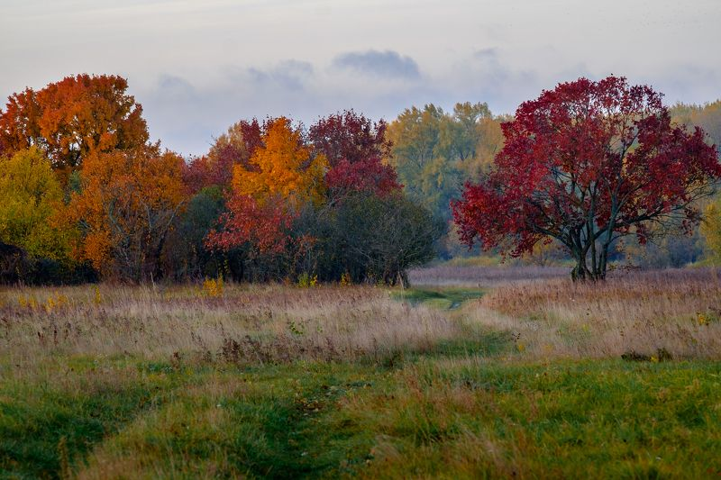 осень,пейзаж,природа,октябрь,дорога Дорога в осеньphoto preview